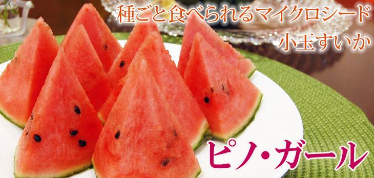 種ごと食べられるマイクロシード小玉スイカ「ピノ・ガール」